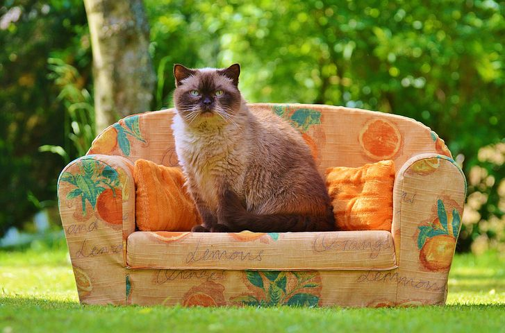 cat on sofa